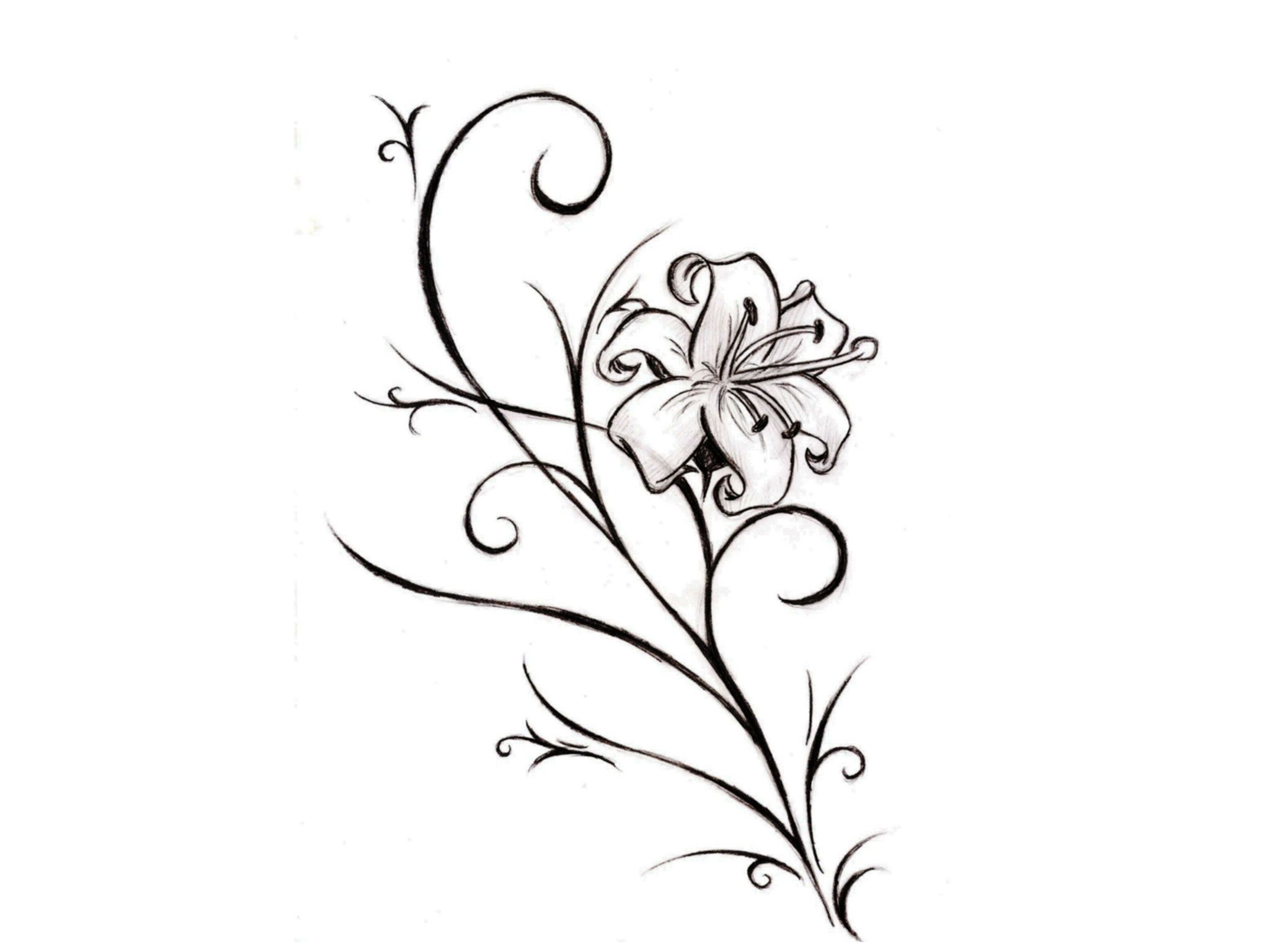 Lily flower tattoo drawing at getdrawings free for personal 2048x1536 lily flower tattoo stencil tatuajes pinterest lily flower izmirmasajfo Gallery