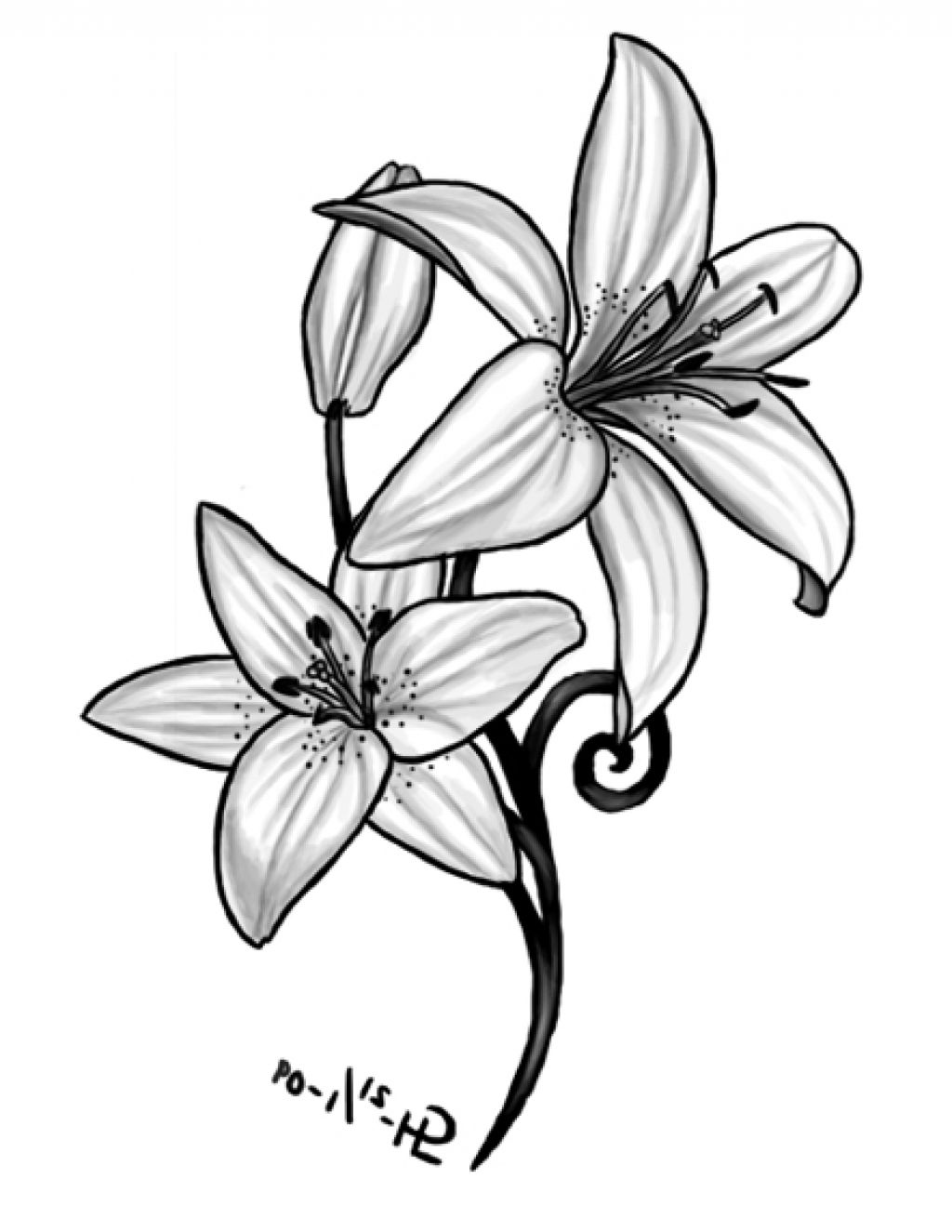 It's just a photo of Comprehensive Tiger Lily Flower Drawing