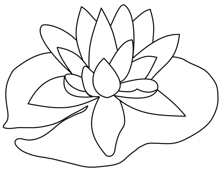 878x675 Flower Drawing Pics Photos Tiger Lily 147 Extraordinary Outline