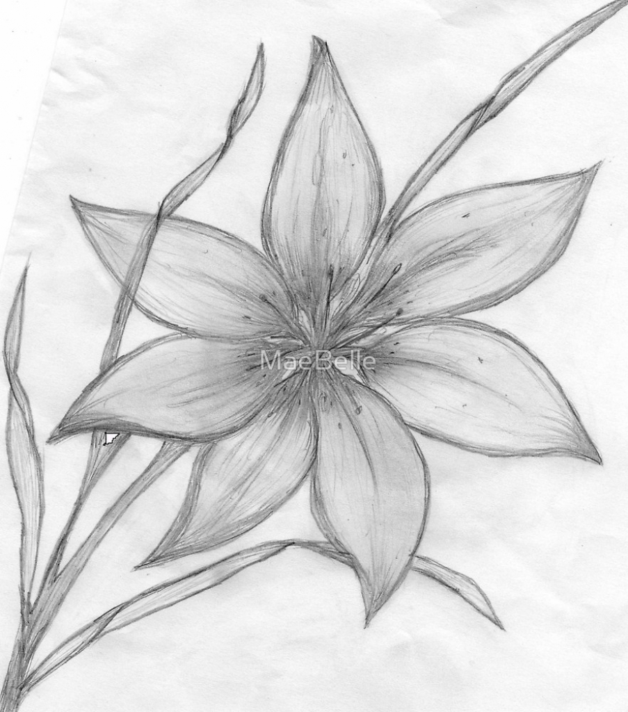 903x1024 Lily Flower Pencil Drawing Lily,pencil Drawing, Maebelle