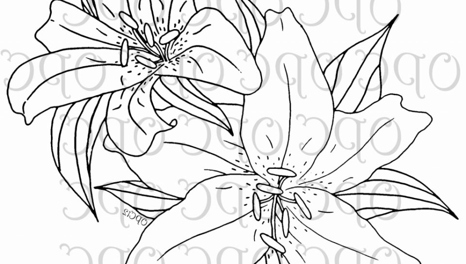 960x544 Lily Of The Valley And Fairy Coloring Pages Page For Kids Flowers