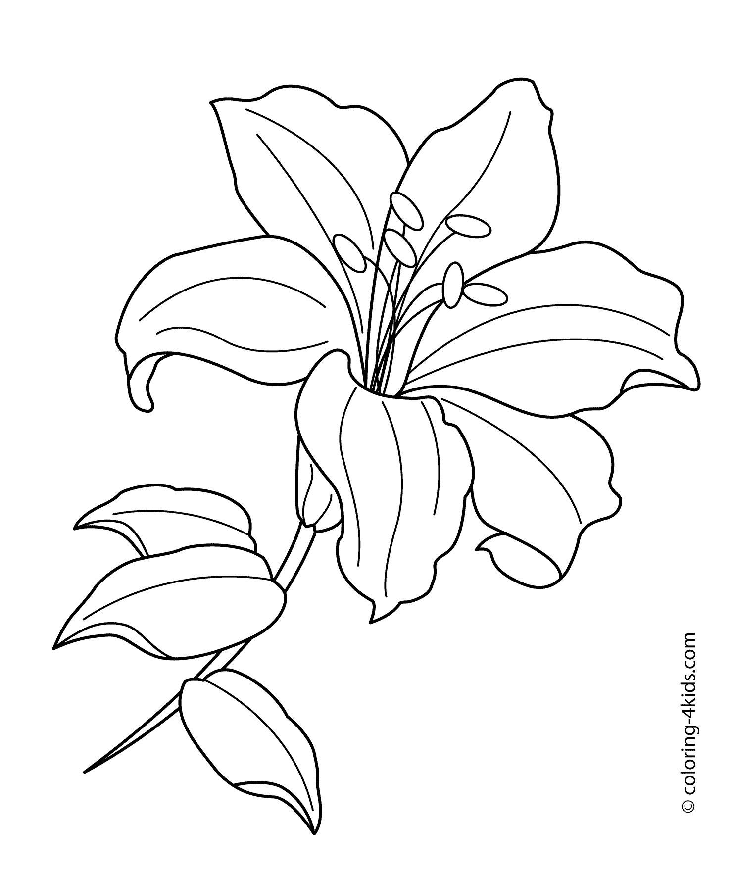 1483x1764 Coloring Pages Lily Flower Coloring Page Fun