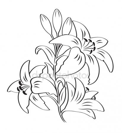 412x450 Drawing Of Lily Flowers Stock Vector Lineartestpilot