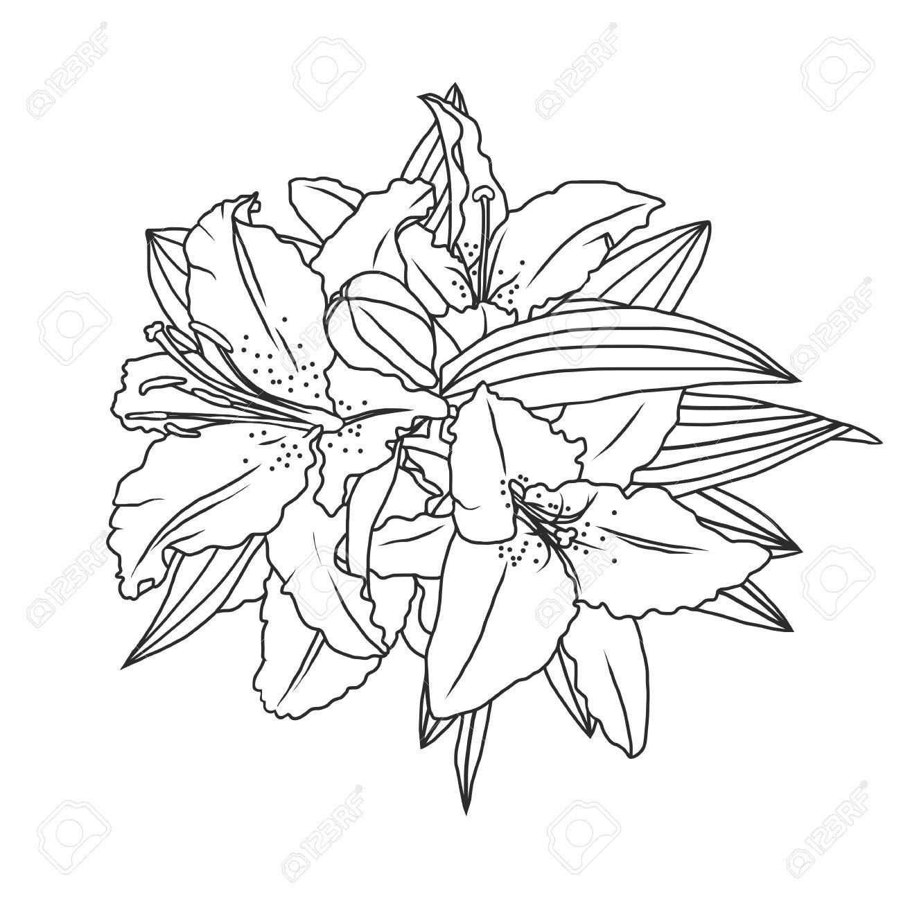 1300x1300 Drawn Lily Line Drawing