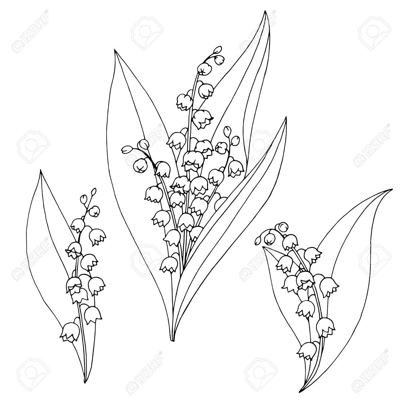 Lily of the valley drawing at getdrawings free for personal 1300x1300 lily of the valley flower graphic black white isolated sketch izmirmasajfo Images