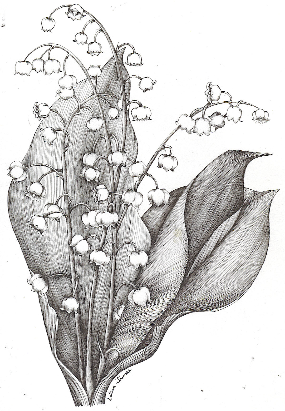 Lily of the valley drawing at getdrawings free for personal 1198x1727 lily of the valley by moonie dreamer on deviantart izmirmasajfo