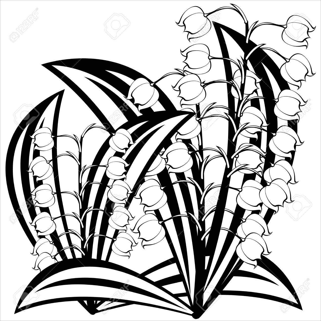 Lily Of Valley Drawing