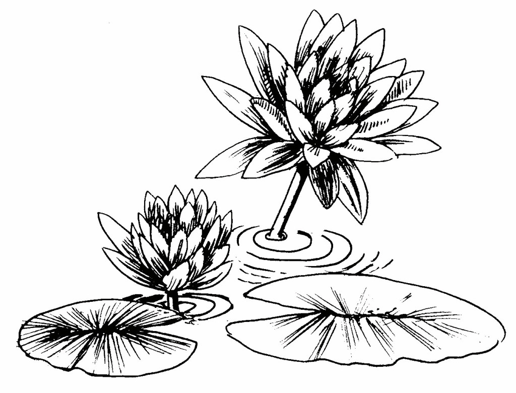 1024x780 Drawing Of A Lily Pad How To Draw And Paint Lovely Lily Pads