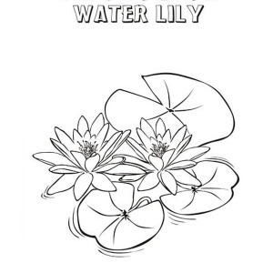300x300 How To Draw Lily Pad Coloring Page How To Draw Lily Pad Coloring