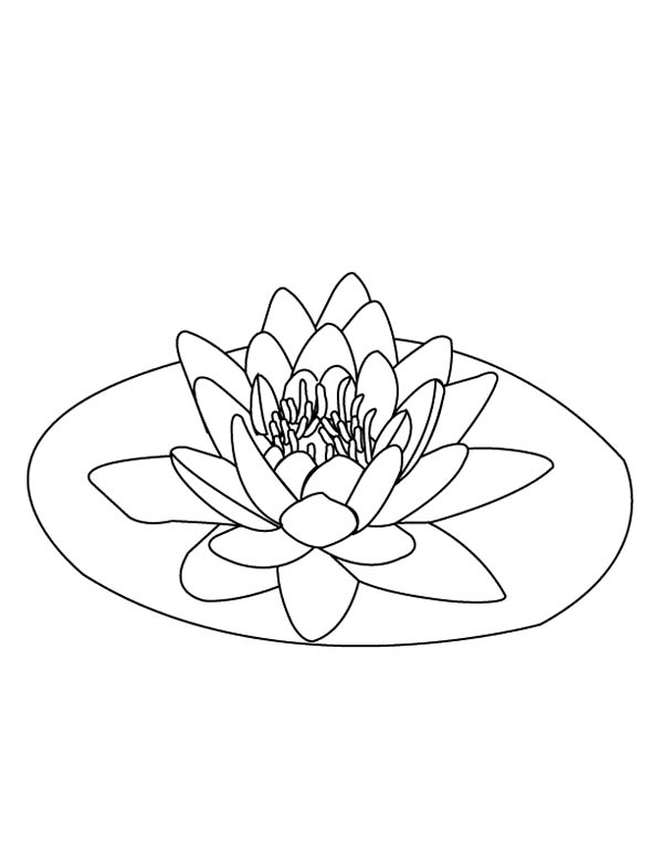 600x776 Lily Pad On The Middle Of Pond Coloring Page Color Luna