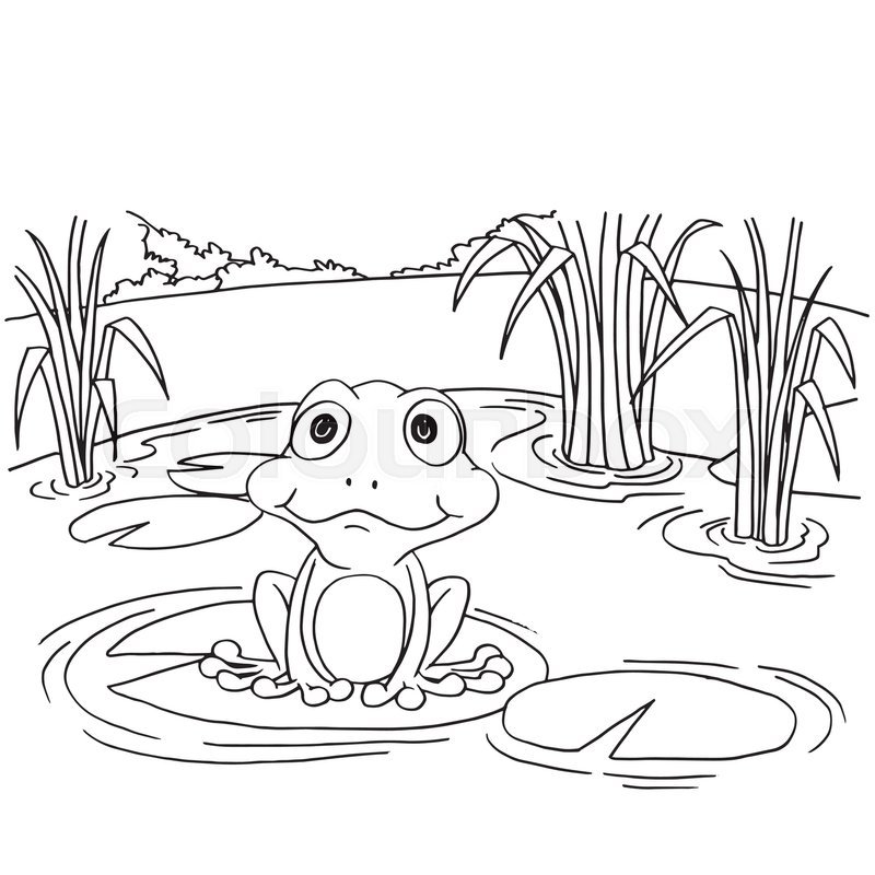 800x800 Cartoon Frog On Lily Pad