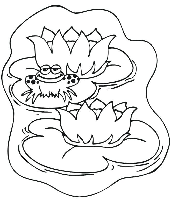 660x776 Coloring Page Frog Coloring Pages Frogs Printable Synthesis.site