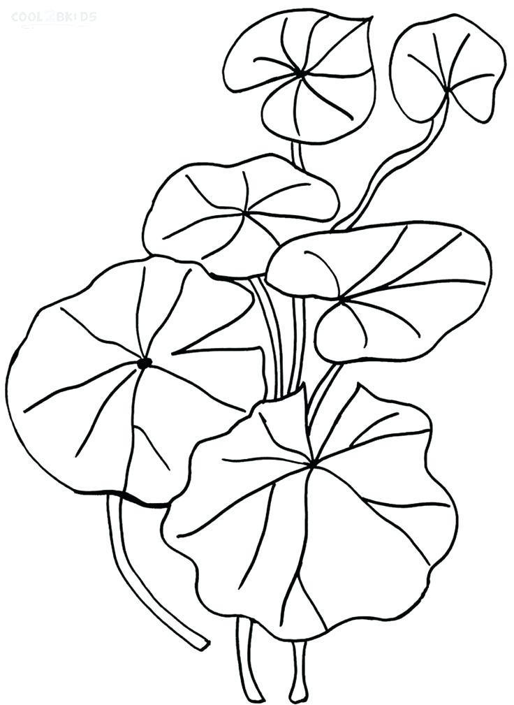 Lily Pad Flower Drawing