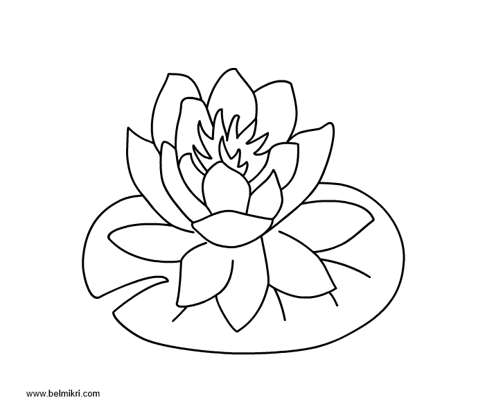 Lily Pad Flower Drawing at GetDrawings