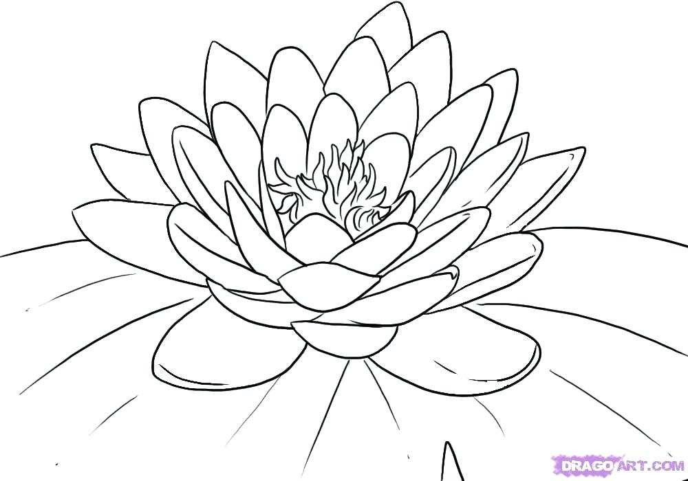Lily Pad Flower Drawing at GetDrawings.com   Free for personal use ...