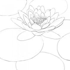 236x236 Lotus Flower Drawing How To Draw A Water Lily Step 9 Handmade