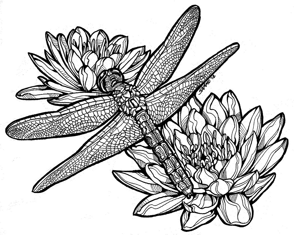 1024x816 Dragonfly And Lily Pads Hand Drawn Illustration. Copic