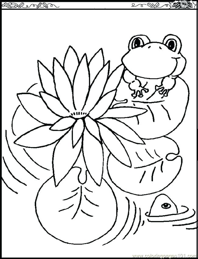 650x847 Free Printable Lilies Coloring Pages In Beatiful Draw Page Lily