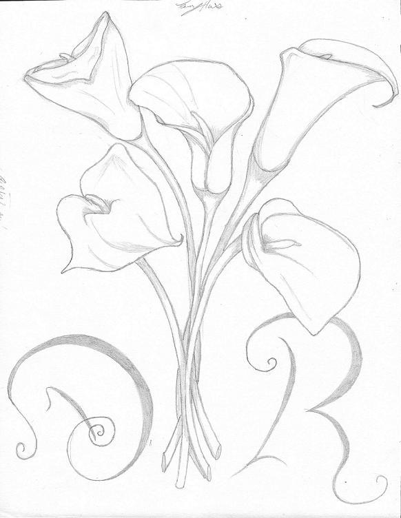 582x752 Calla Lily Drawing Calla Lily Pencil Sketch Drawing Image