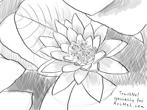 600x449 How To Draw A Water Lily Step 4 Flowers Water