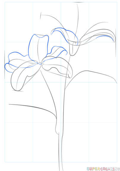 404x575 How To Draw Tiger Lily Step By Step Drawing Tutorials