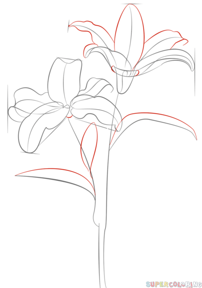 404x575 How To Draw Tiger Lily Step By Step. Drawing Tutorials For Kids