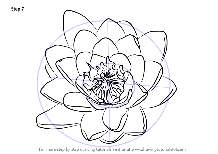 846x600 Learn How To Draw Water Lily Flower (Lily) Step By Step Drawing