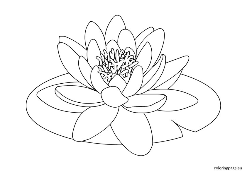 842x595 Water Lily Clipart Flower Drawing