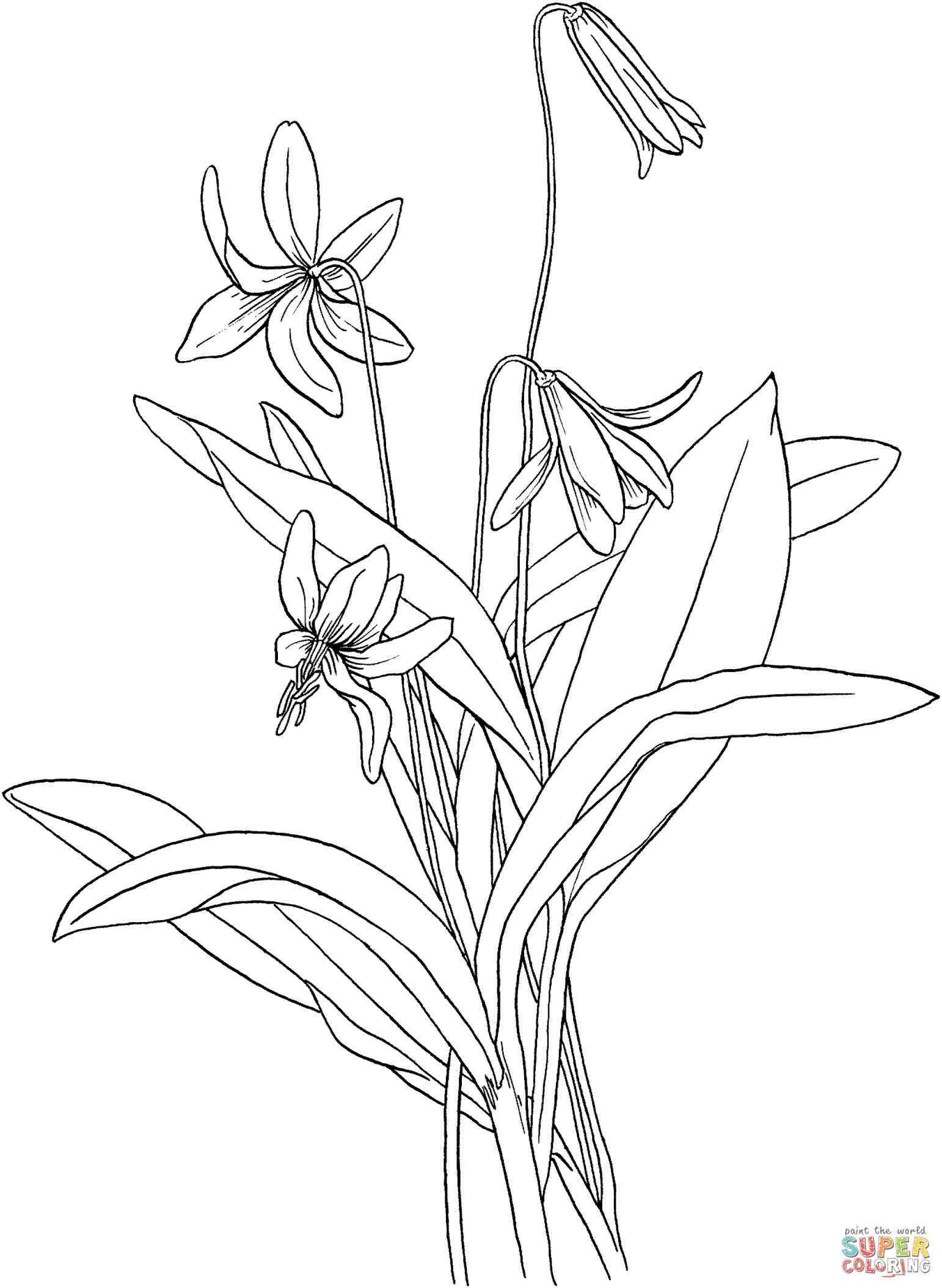 1542x2108 Download Image Ing Best How To Draw A Tiger Lily. Tiger Lily