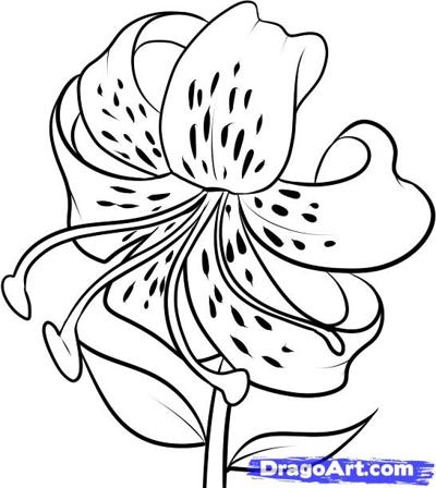 400x448 How To Draw A Tiger Lily Step 7 Painting, Drawing