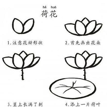 416x432 To Draw A Water Lily Step By Step