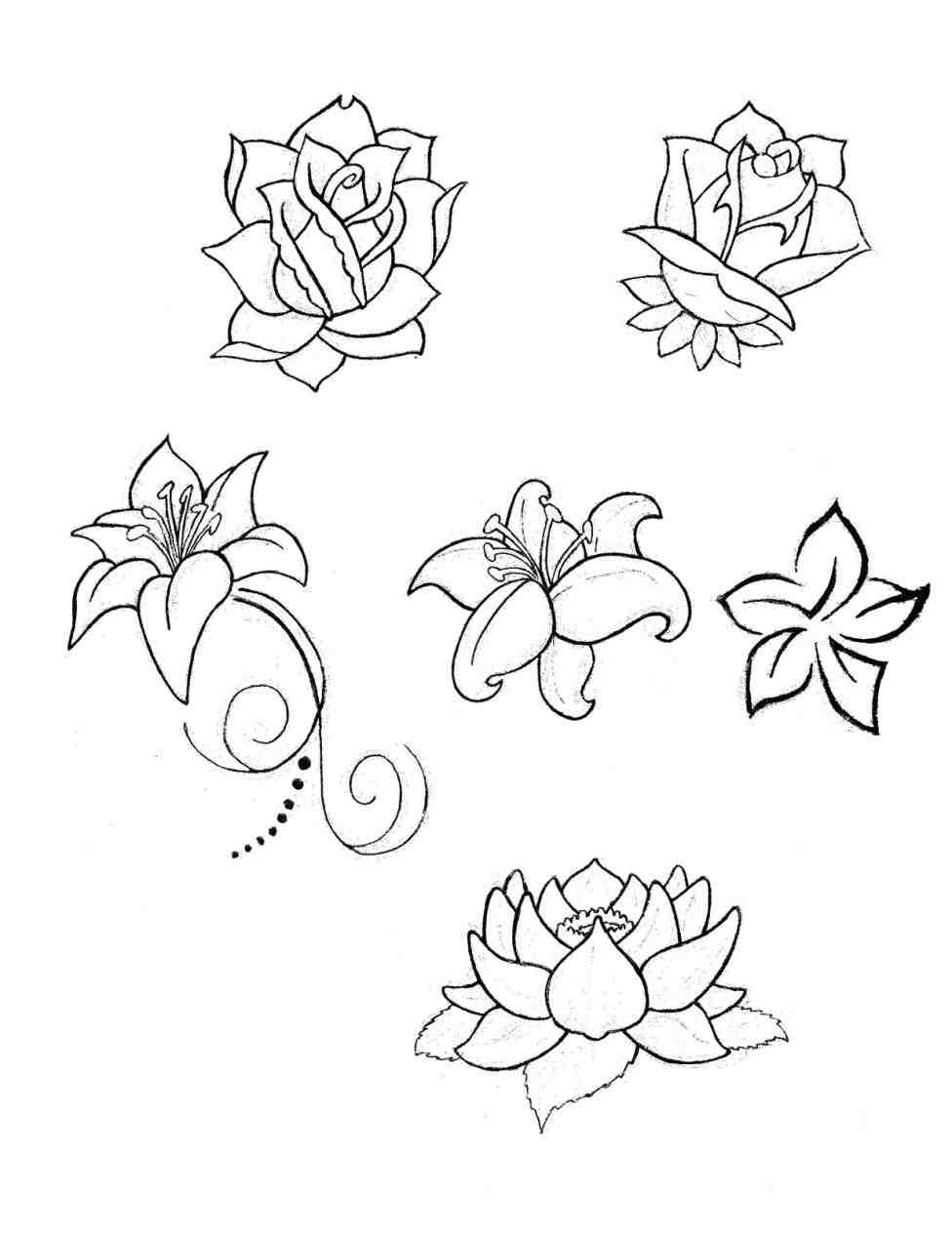 976x1264 Water Lily Flower Drawing Step By Step