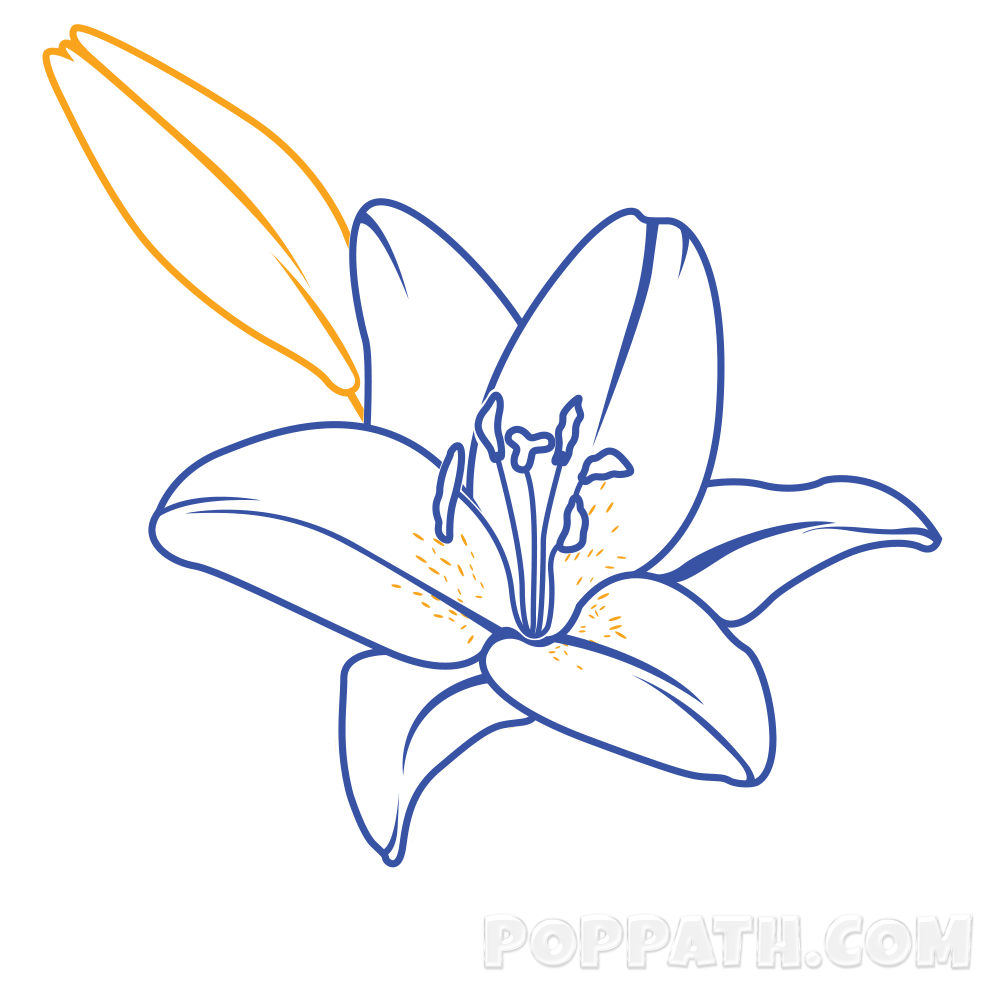1000x1000 How To Draw A Lily Pop Path