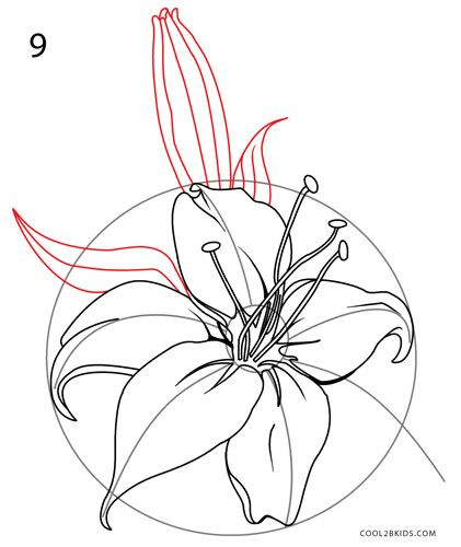 421x500 How To Draw A Lily Step 9 Art Drawing Step