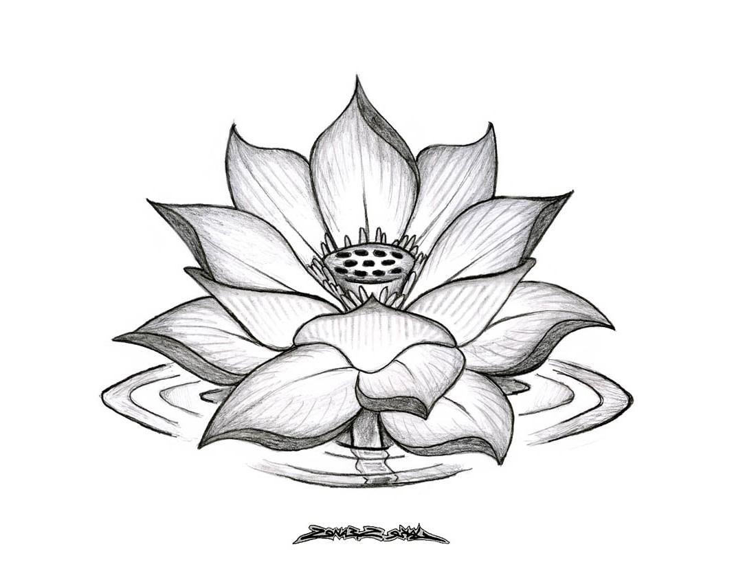 1100x850 Lotus Flower Drawing Sketch