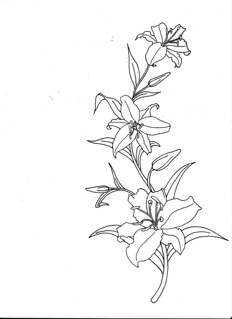 762x1048 Another Lily Tattoo Design