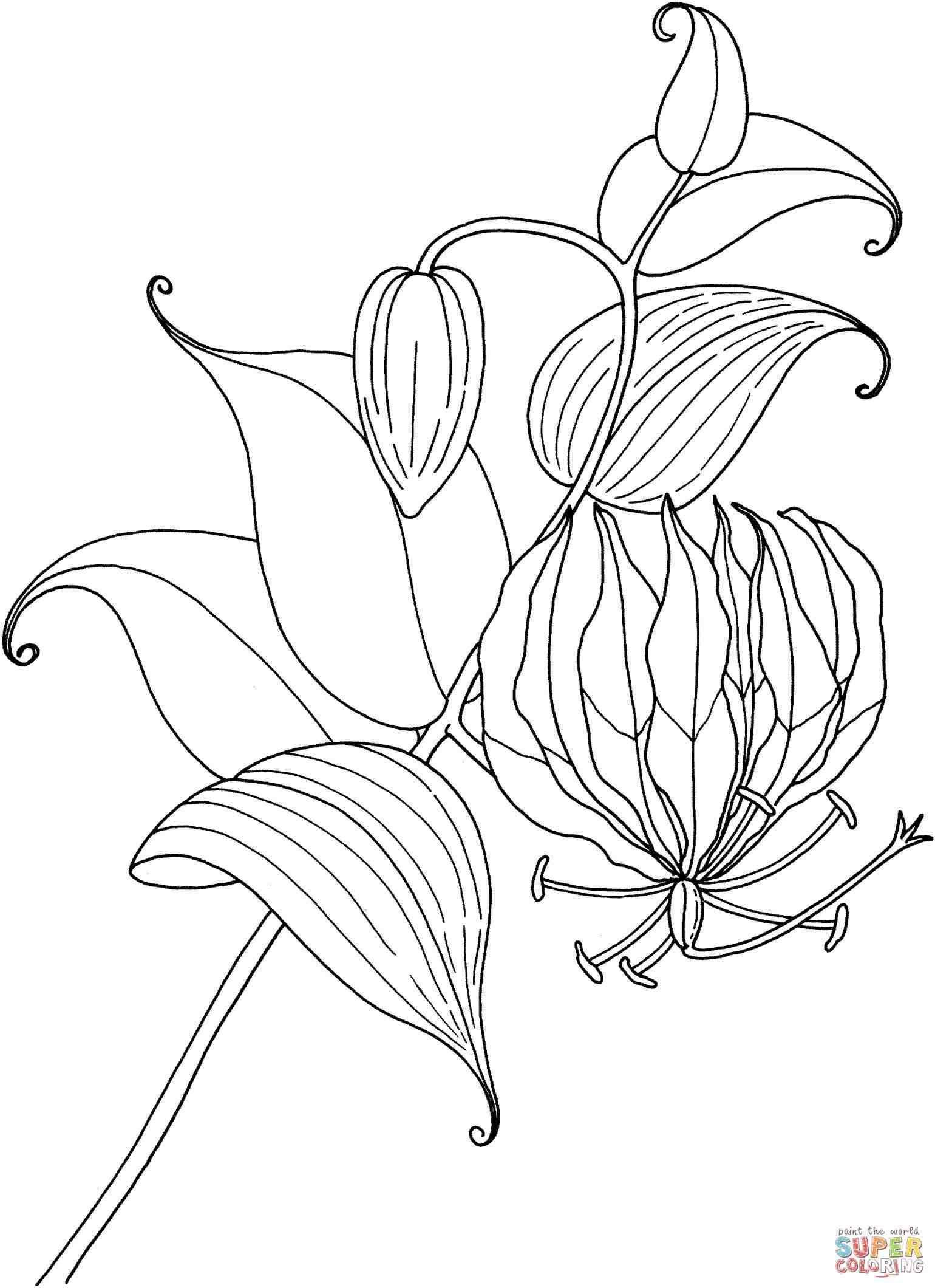 1540x2120 Tiger Lily Tattoo