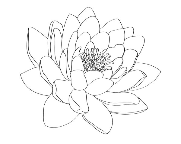 600x480 Water Lily Tattoo Design By Selective Universe