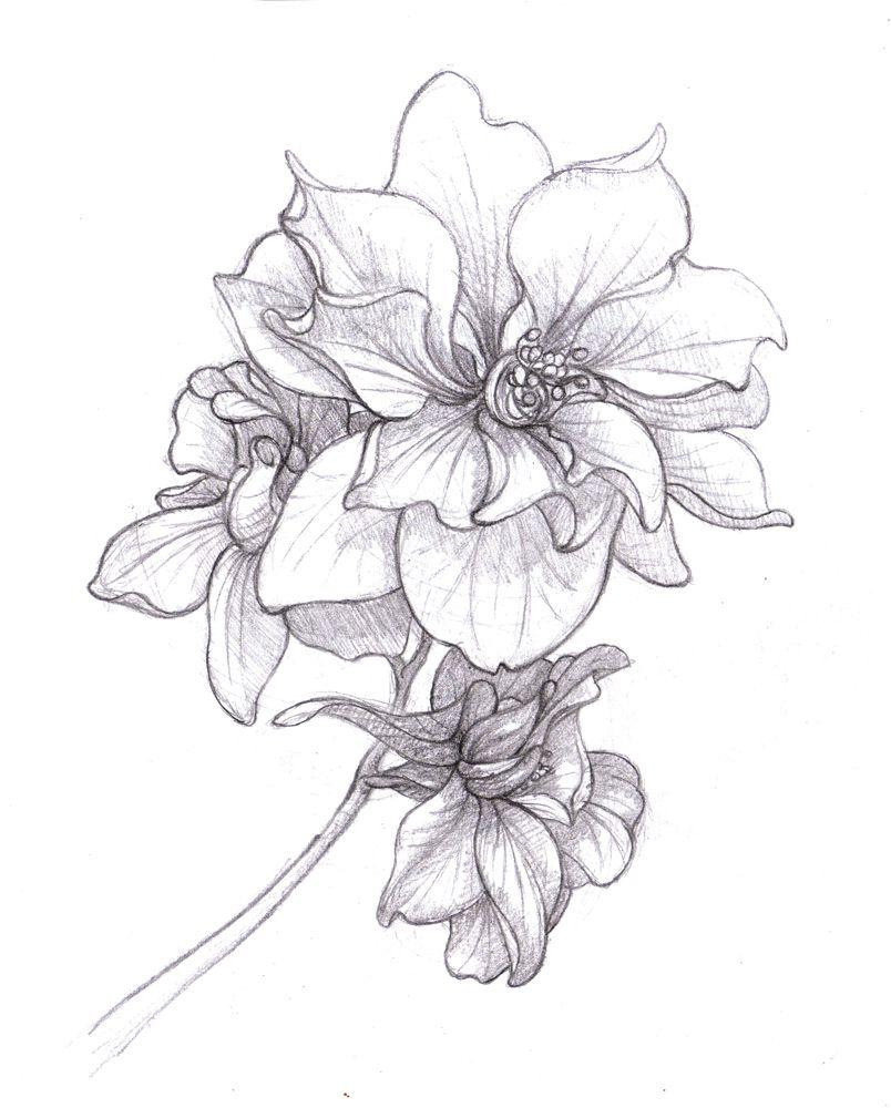 804x1000 Larkspur Drawing July Birth Flower