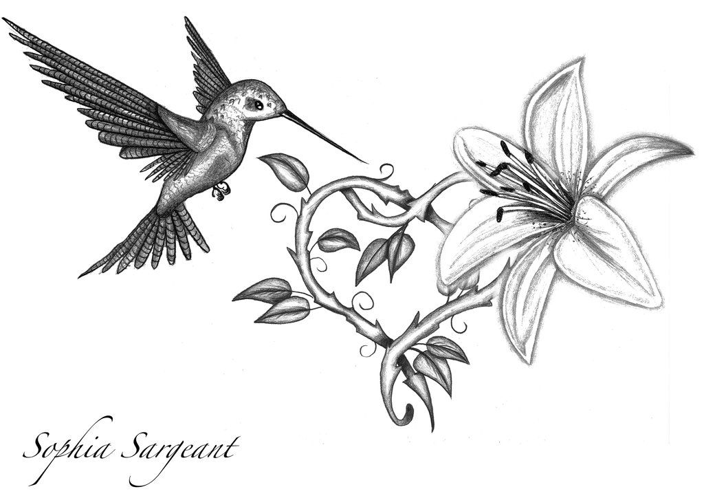 1024x724 Lily Tattoo Sketch And Lily Tattoo Design By Sophiasargeant