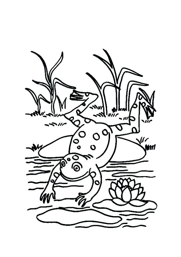 600x849 Pond Coloring Page Lily Pad Picture Of Frog On Lily Pad Catching