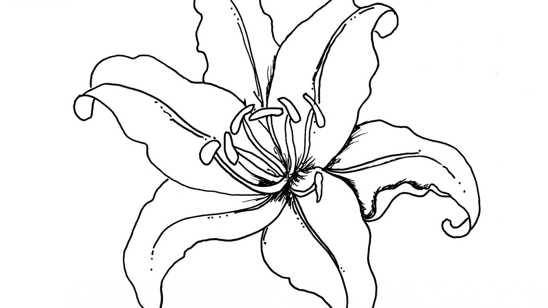 1920x1080 Free Printable Lilies Coloring Pages In Beatiful Draw Page Lily