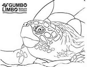 304x235 Gumbo Limbo Kids Gumbo Limbo Nature Center