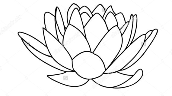 570x320 Lotus Flower Line Drawing Lotus Flowers Icon Black Line Drawn