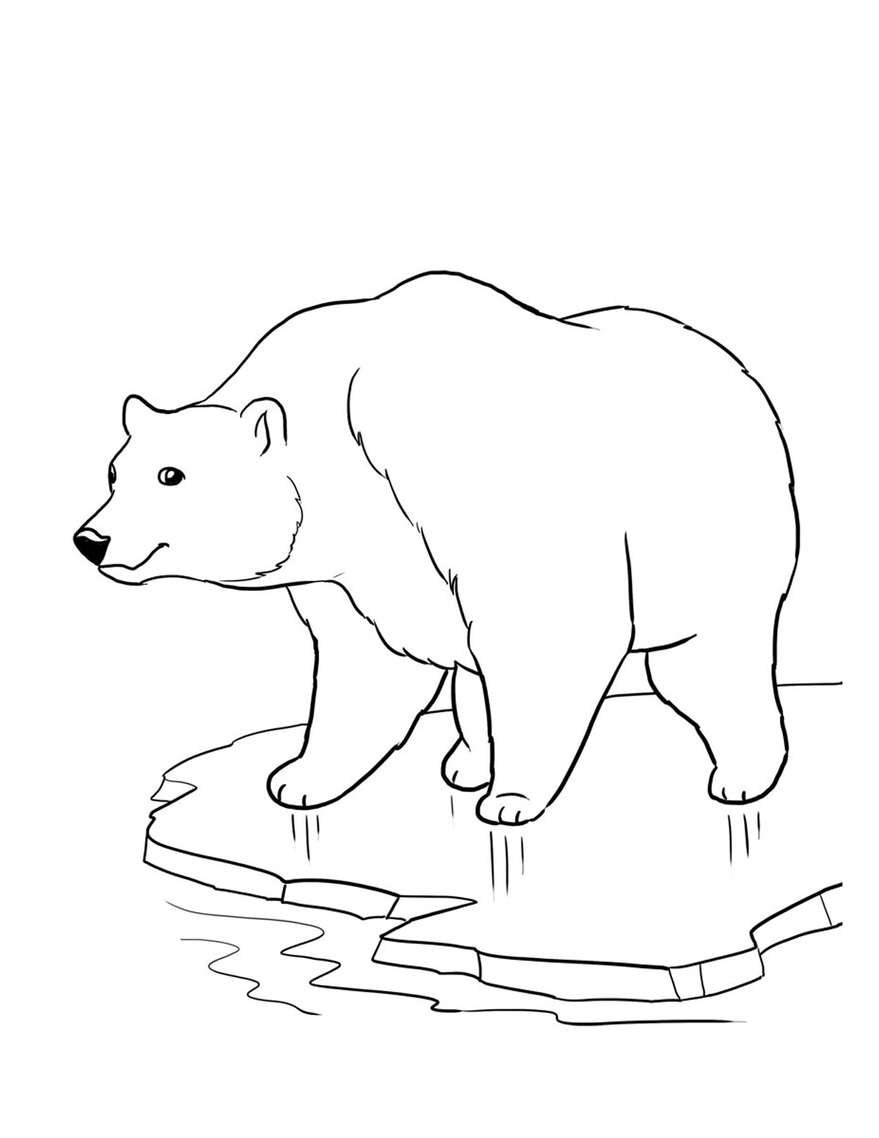 1275x1650 Polar Bear Line Drawing Color Sheets Of Polar Bears Endangered
