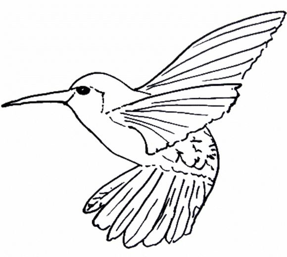Line Drawing Bird