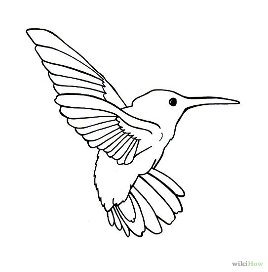 543x550 Draw Hummingbirds Simple Bird Drawing, Bird Outline And Stenciling