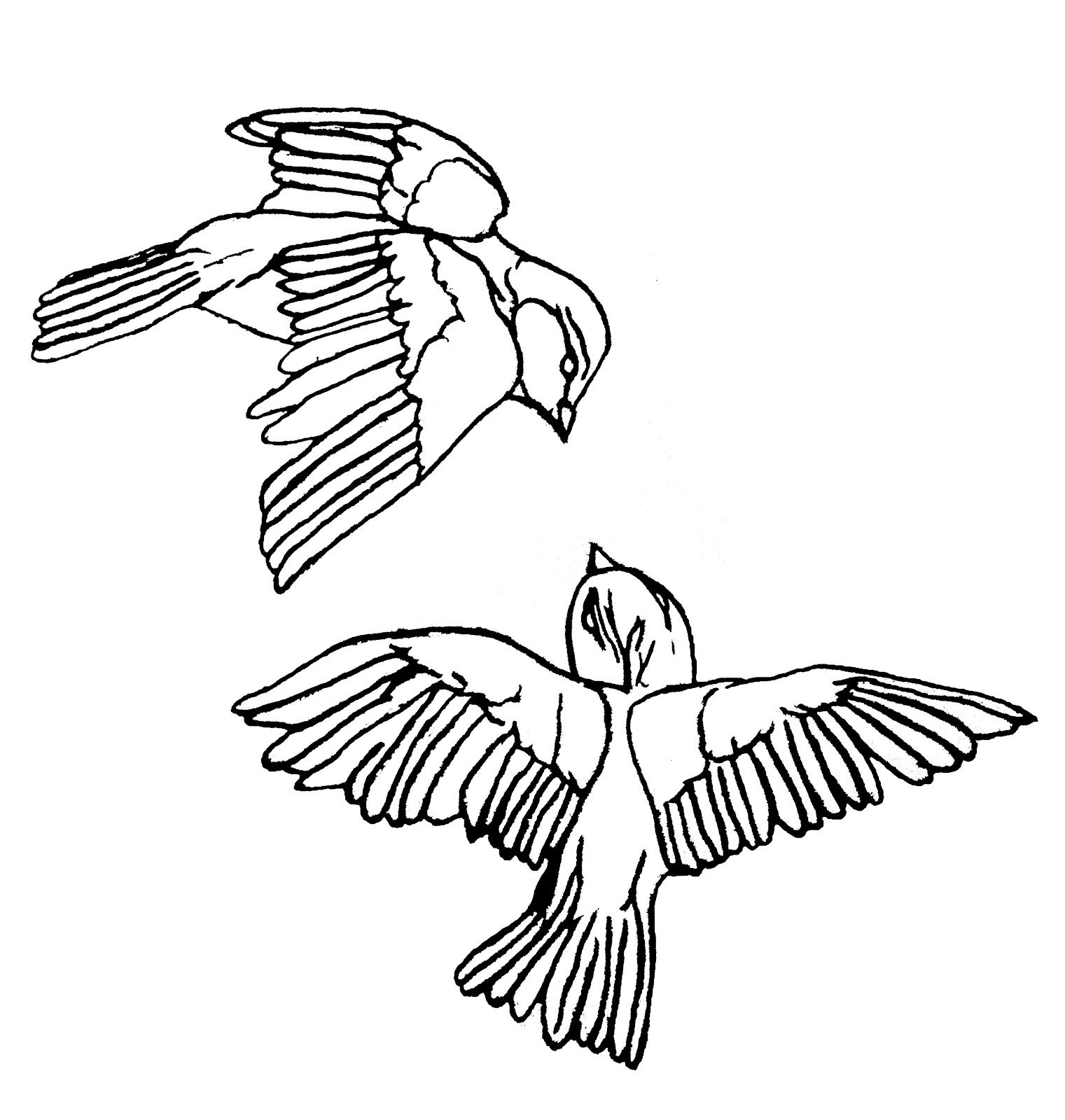 1521x1600 Outline Drawing Of A Bird
