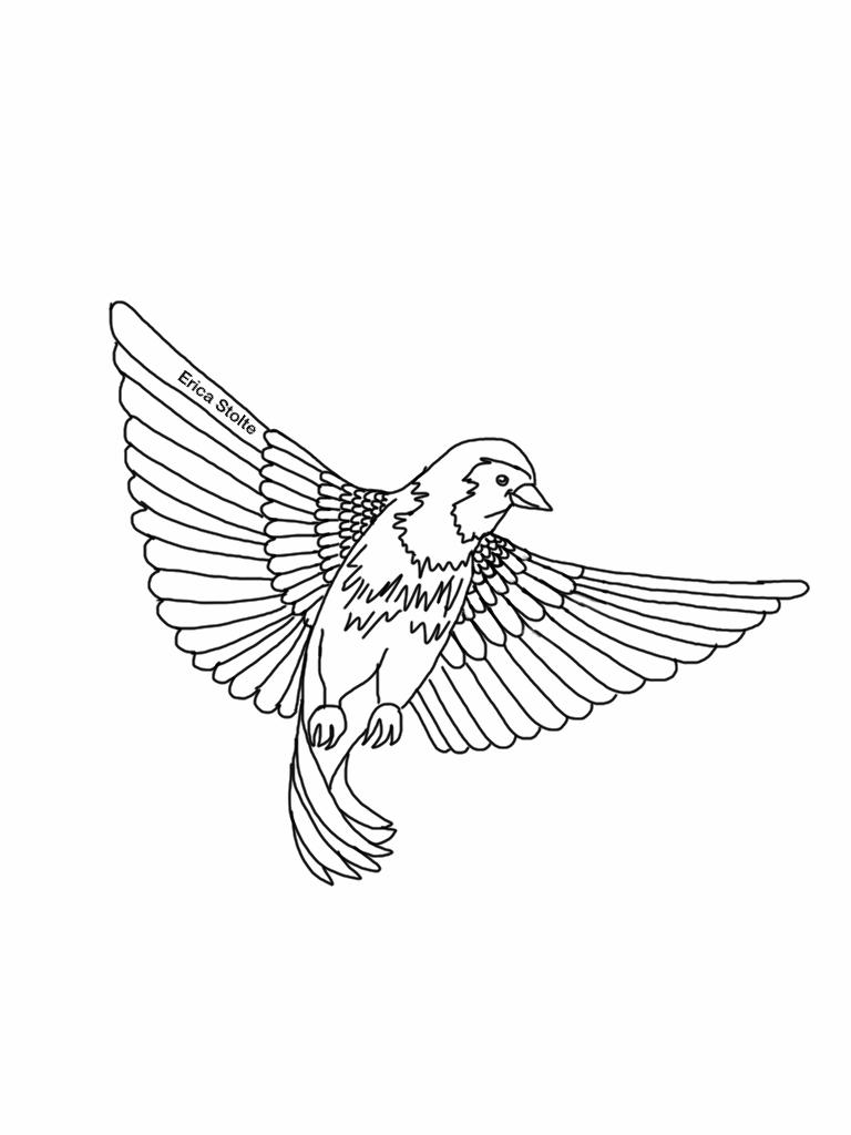 768x1024 Bird Line Drawing By 51mrsnickjonas94