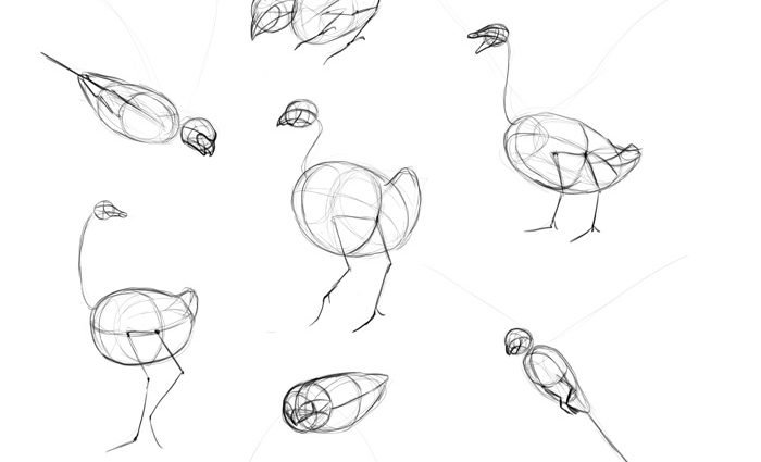 700x425 How Do You Draw A Bird Step By Step How To Draw Birds Step Step